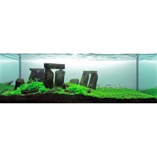 Package 3 - Live Water Plants Collections( Mixed)